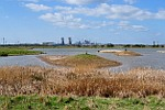 RSPB Saltholm w Middlesbrough